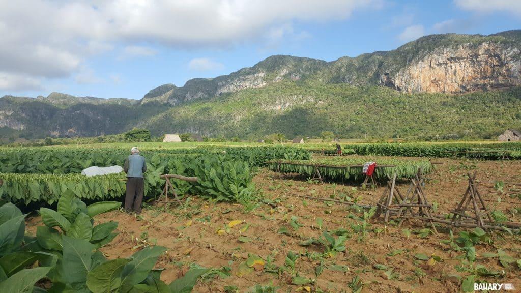 Plantaciones Valle de Viñales
