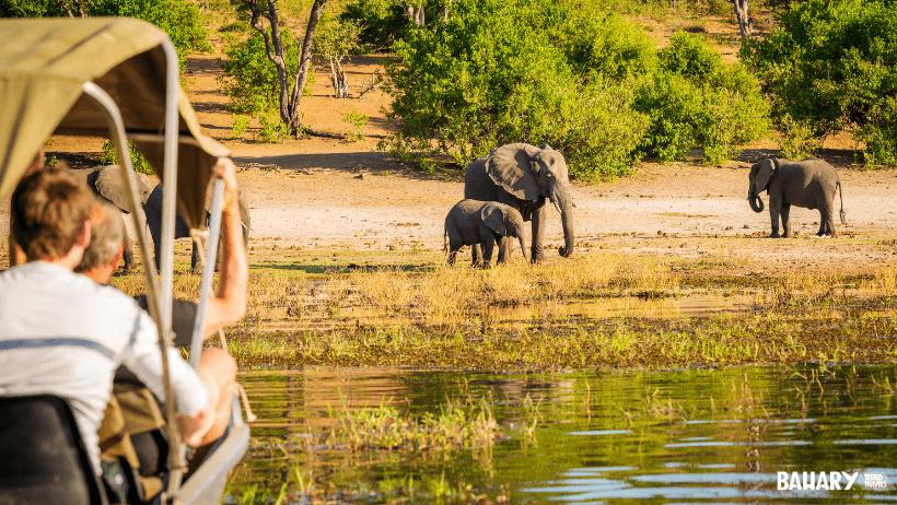 Safari en Mikumi National Park