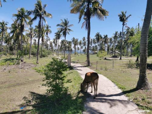 Island-hopping-bohol-filipinas-6