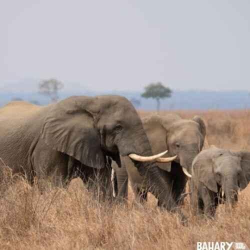 Mikumi National Park animals elephants