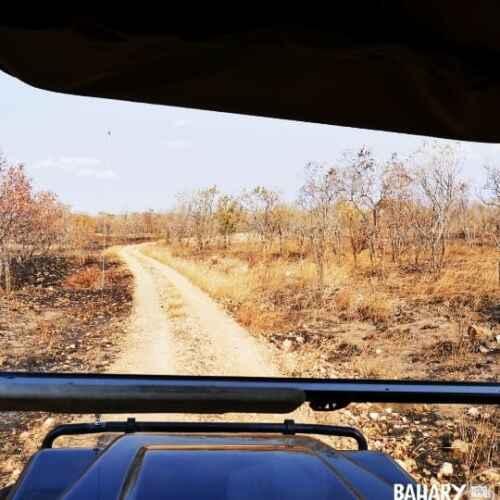 Mikumi National Park animals tour safari