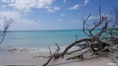 playa cayo jutias 2