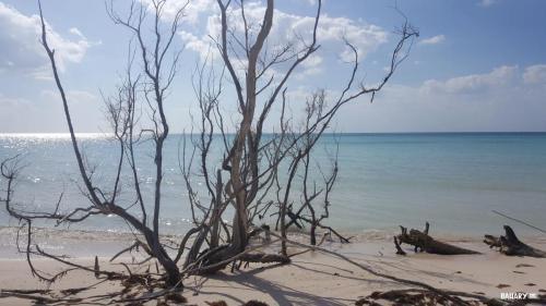 playa cayo jutias 4