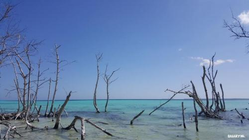 playa cayo levisa 2